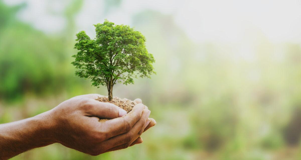drzewo w rękach