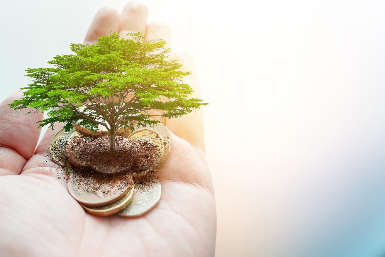 drzewo rosnące na pieniądzach