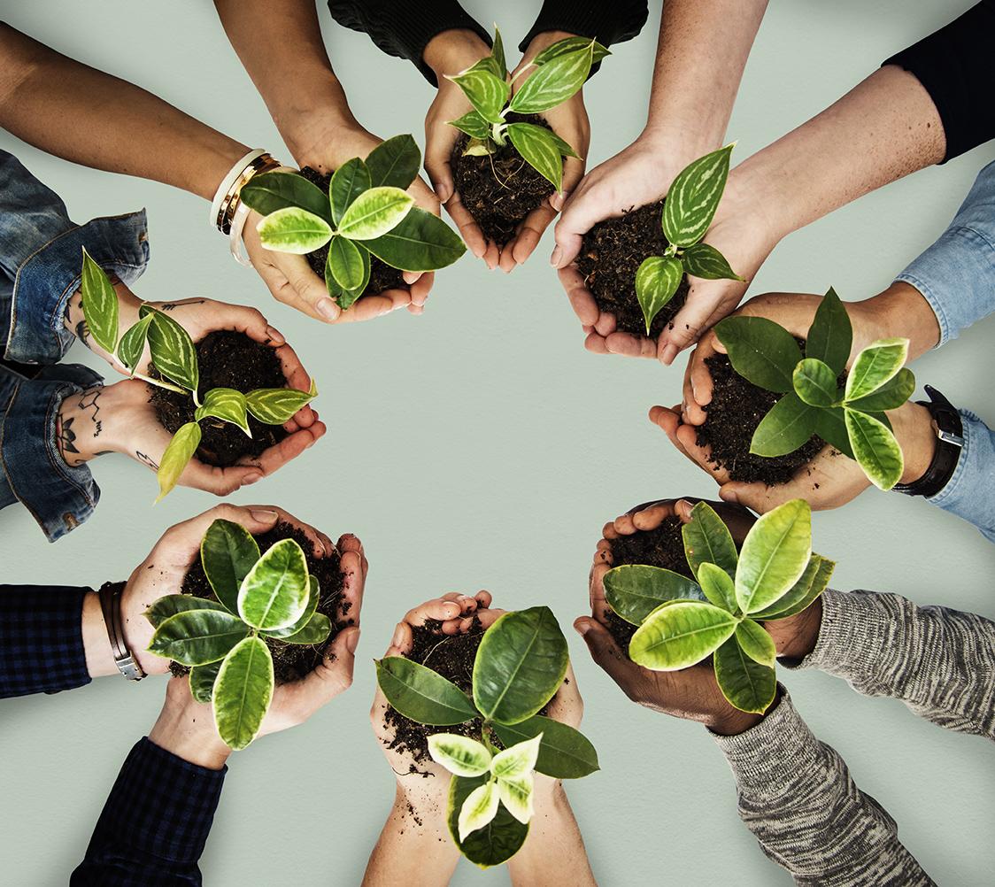 wspólna praca rośliny w dłoniach